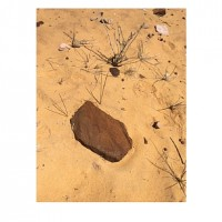 Cara Despain: Seeing the Stone