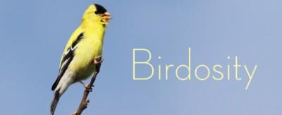 Birdosity: Fancy Feet