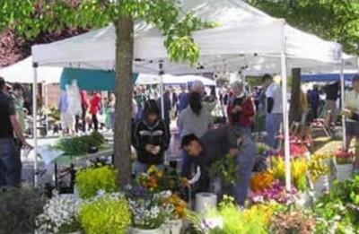 primary-Harvest-Market-at-Rockhill-1461753462