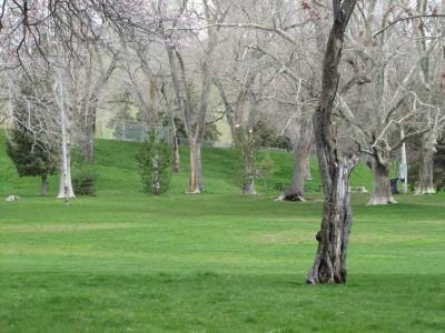 Birds and Parks: Lindsey Gardens