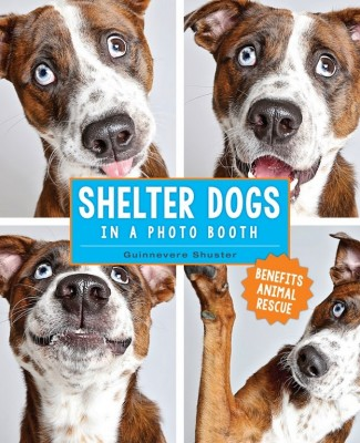 Guinnevere Shuster: Shelter Dogs in a Photo Booth