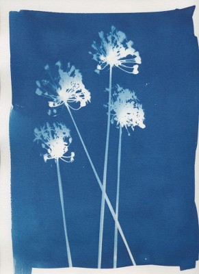 Photograms for Teens