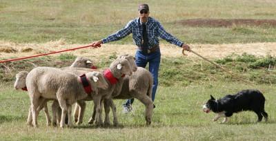 Vita Bone Soldier Hollow Classic Sheepdog Championship
