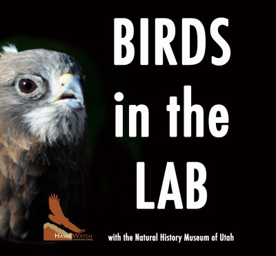 Birds in the Lab!