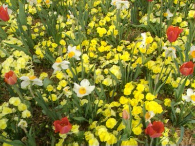 Bloomin' Bulbs