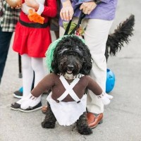 Howl-O-Ween! on Historic Main Street