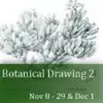 Botanical Drawing 2