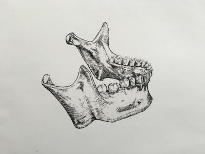Illustrating the Human Skeleton
