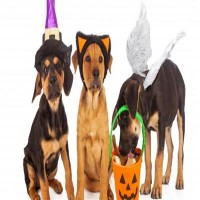 primary-Pet-Costume-Contest-1476892001