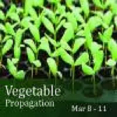Vegetable Propagation