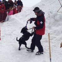 primary-Avalanche-Dog-Demonstration-1482154383