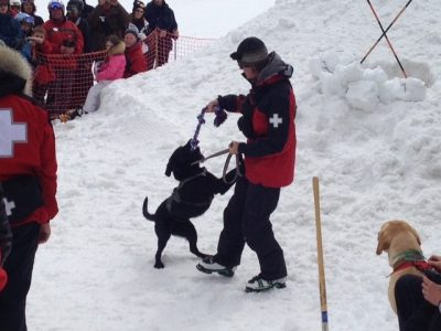 Avalanche Dog Demonstration