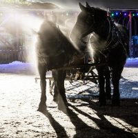 Country Christmas at Young Living's Mona Lavender Farm
