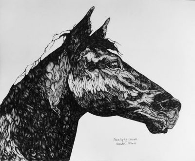 Intro To Drawing: The Body And Spirit Of The Horse