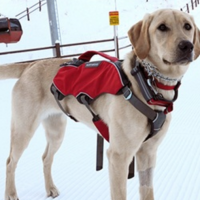 primary-Meet-the-Avalanche-Dogs-1481925306