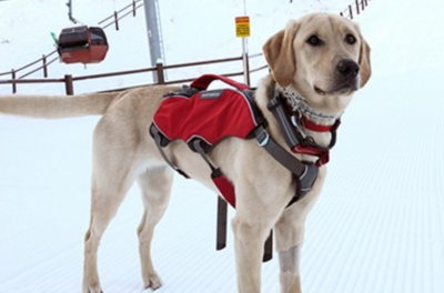 Meet the Avalanche Dogs