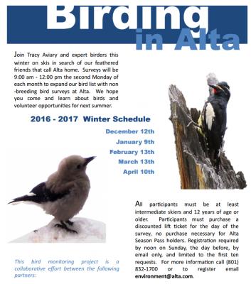 Monthly Bird Surveys