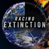 primary-Racing-Extinction-1482333977