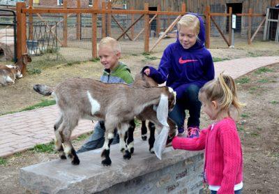 kids-petting-baby-goats