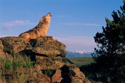 Making Room for Wild Critters in Utah