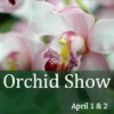 primary-Orchid-Show-1486729107