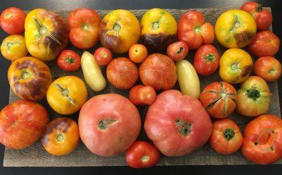 Beginning Organic Gardening