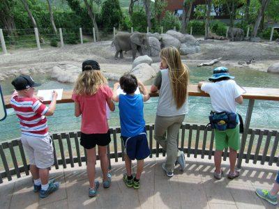 Hogle Zoo Art Camp Session 1