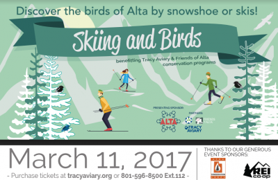 Skiing and Birds