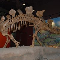 Utah Field House of Natural History State Park Mus...
