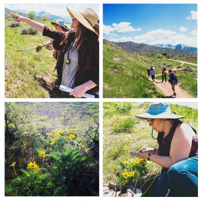 Foothill Wildflower Walks