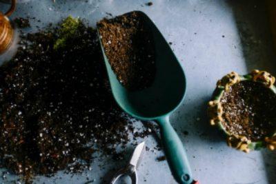 Soil Basics with Celia Bell