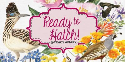 9th Annual Ready to Hatch Fundraiser