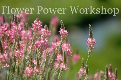 Flower Power Workshop