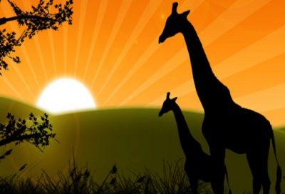 Member Sunrise Safari