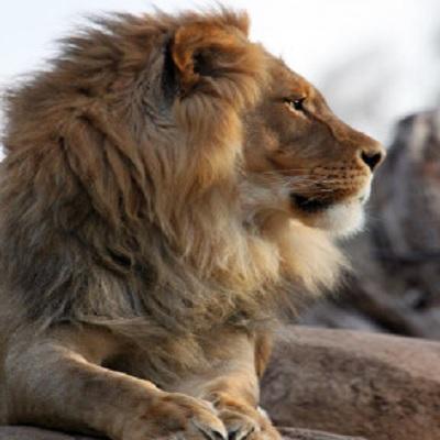 Member Sunset Safari