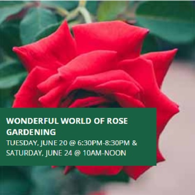 Wonderful World of Rose Gardening