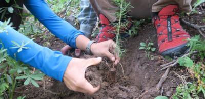 Alta TreeUtah Planting