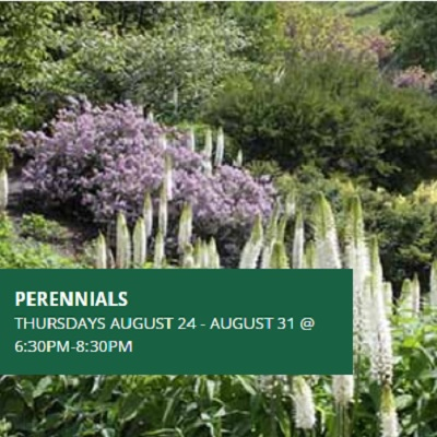 Perennials - Late Summer and Fall Bloomers