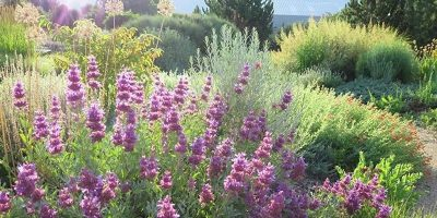 Selecting and Propagating Native Plants for Low Water Landscaping