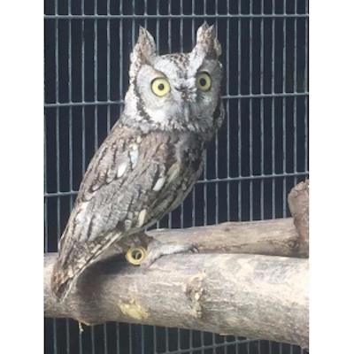 Owl Box Class