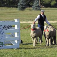 Soldier Hollow Sheep Dog Championship
