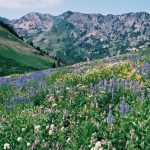 2019 Wasatch Wildflower Festival