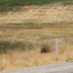 Cache Valley Century Ride