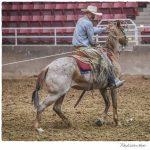 Great Basin Buckaroo Gathering