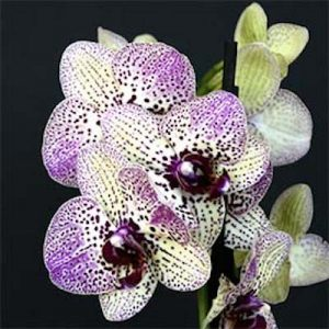 Fall Orchid Show