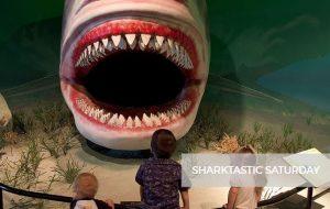 Sharktastic Saturday