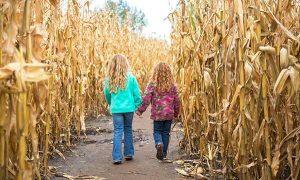 Cornbelly's 2018 Corn Maze