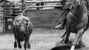 Winter Series Rodeo Presented By Golden Spike Event Center