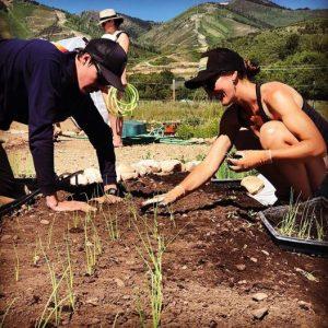 AmeriCorps Volunteer and Community Outreach Coordinator - Summit Community Gardens