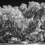 Wasatch Camera Club Photography Exhibit: Lovely As...